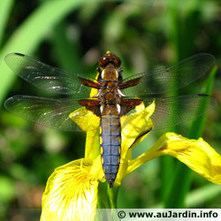 Pond insects