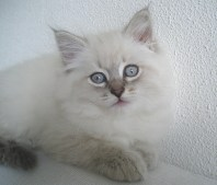 picture of cute fuzzy kitten