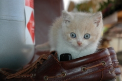 picture of kitten by shoe