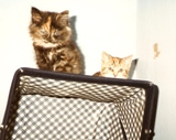 picture of 2 kittens on pram roof