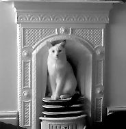 picture of cat sitting in fireplace