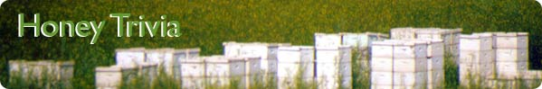 Honey Trivia (bee-yard in background)