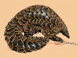 Pangolin 300x223 10 Mammals that have the best defense