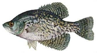 Lake Placid Crappie Fishing