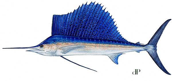 Florida Sailfish Deep Sea Fishing
