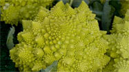 Market Watch: Romanesco cauliflower's spectacular looks