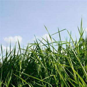 Fertilizers For Your Lawn