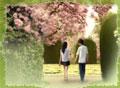 如花的爱情
