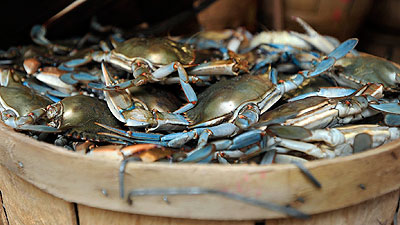 Pictures: Steaming crabs at Salty Dog's Crab House