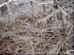 Ice Storm Picture