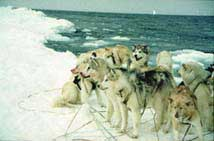 Dog Sledding Team