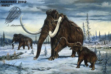 Wooly Mammoth (mammuthus primigenius), drawing by artist Josef Moravec