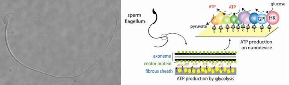 sperm Our Bionic Future: 5 Amazing Revolutions in Biotech