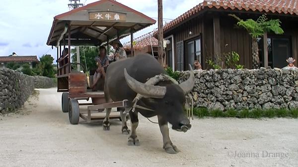 ancient bullock cart
