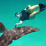 How Far Will Dolphins Go to Relate to Humans?