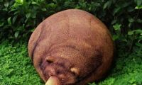 Funny and Unique Bear Beanbag Chair