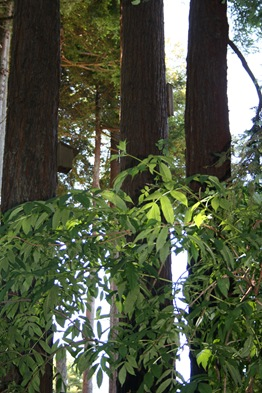 mature trees with nestboxes