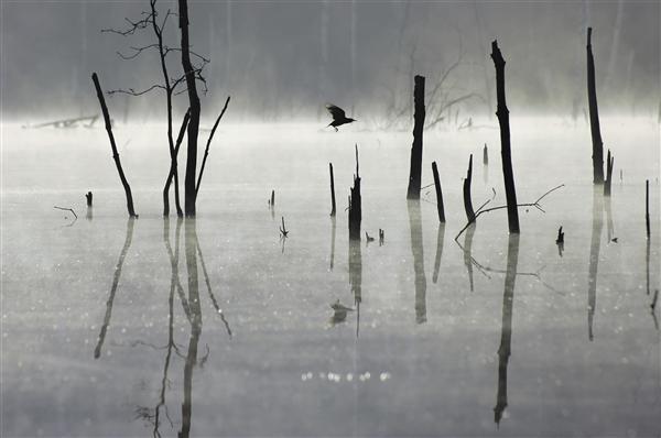Lake in the Fog