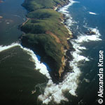 Tomales Point aerial photo © Alexandra Kruse