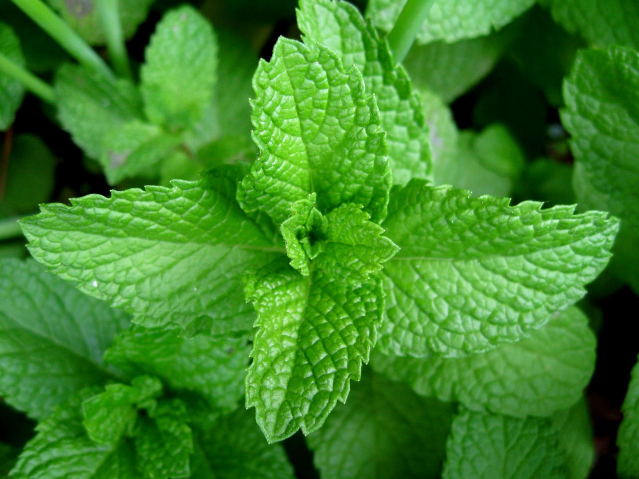 peppermint Natural Home Remedies
