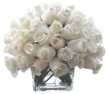 Vandella roses