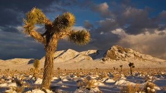 Winter is the ideal time to explore the dramatic, beautiful landscapes of Death Valley. (Witold Skrypczak/LPI)