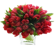 Red Double Tulips