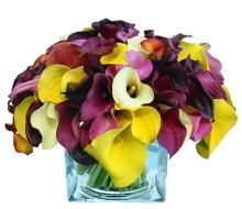 Bright Multi Mini Calla Lily