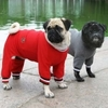 Dog_sweatsuits