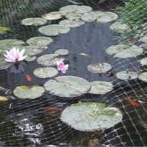 Picture of the fish pond used in the video.