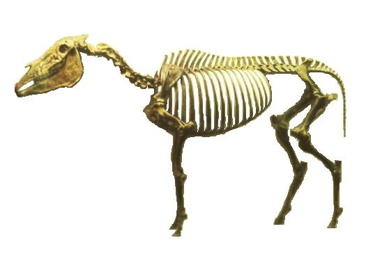 [Fossil Horse]
