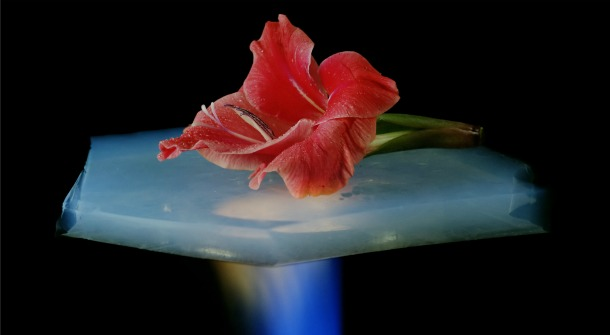 Aerogel has incredible thermo-insular properties