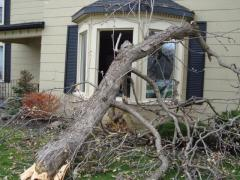 A tree invaded a home in Beamsville, ON Thursday