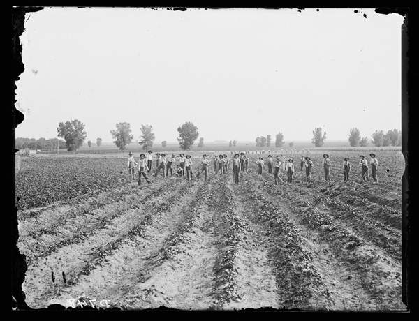 Solomon D. Butcher's photograph from about 1905 depicted boys working in a sweet potato field at the State Industrial School in Kearney. NSHS RG2608-749
