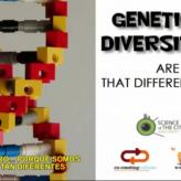GENETIC DIVERSITY. Are we that different?