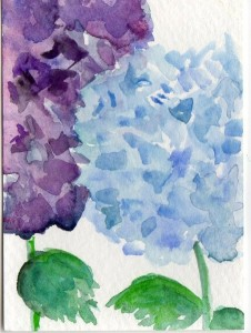 SharonFosterArt 226x300 Hydrangea Original Painting Art Card
