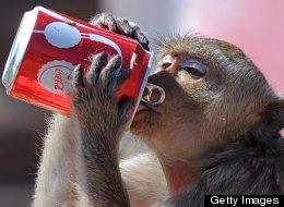 Soda Ban in New York May Make Way To Boston
