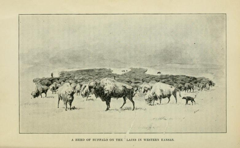 A herd of buffalo on the Plains in western Kansas. From Frank A. Root and William E. Connelley, The Overland Stage to California (Topeka, 1901).