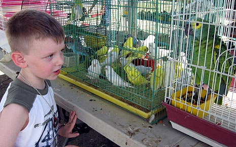exotic birds in simple cages