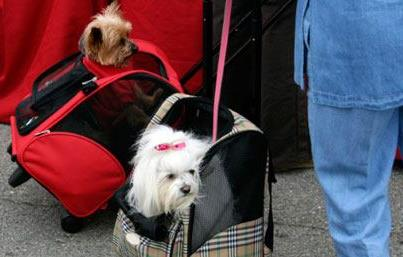 Photo: Traveling internationally with your pet? Check out our tips for preparing Fido or Fluffy for the trip. http://is.gd/kDBa0H