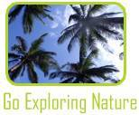 Grand Cayman Tours, Activities and Tourist Attractions