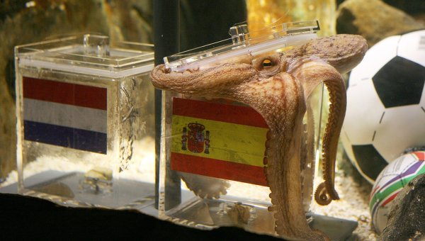 German octopus predicts Spanish victory in World Cup