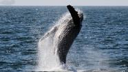 $15 for Whale Watching Tour (reg. $32)