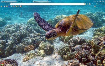 Google Chrome Green turtle of Kahoolawe