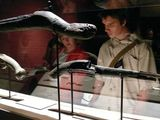 Photo: People at Real Pirates Exhibit