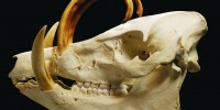 Head Hunter: Rare Specimens From a World-Class Skull Collection
