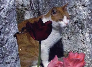 Ginge and tulips 1 300x217 Tarot Reading For Pets