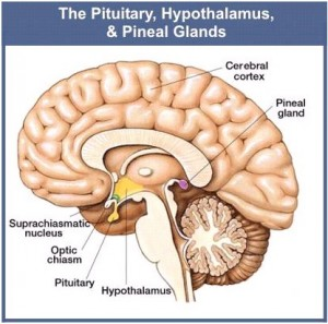 Pineal Pituitarty Glands1 300x297 Developing Intuition   Practice and Ritual