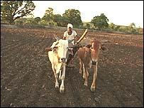 A farmer in Vidarbha region