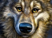 Wolf Totem Picture  (2d, creature, animal, wolf, caricature)
